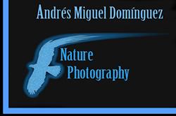 Andrés Miguel Domínguez. Wildlife and nature photographer. Fotografía de naturaleza y vida salvaje - Fotografía de naturaleza, imágenes de vida salvaje. Nature photography, wildlife pictures